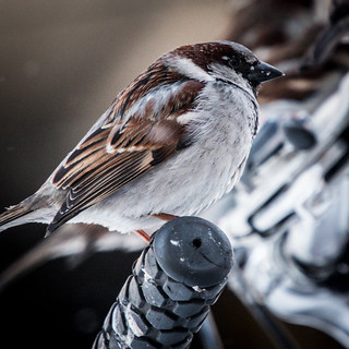 Birds on State Street | by kenfagerdotcom
