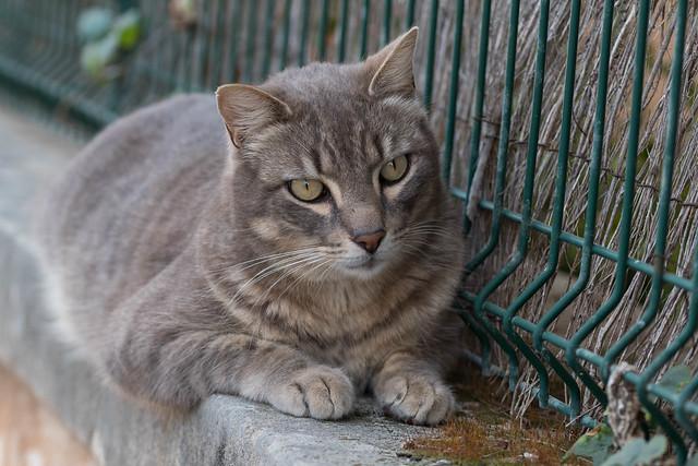 IMG_0934 Cat in Sa Rapita