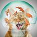 Peanut Fishbowl Cat