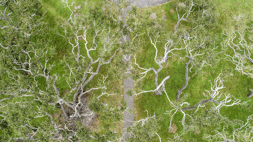 aransascounty gooseislandstatepark rockport texas thebigtree usa aerial attraction down green image landmark landscape nature oaktree oaktrees photo photograph touristattraction trees f45 mabrycampbell march 2019 march162019 20190316aerialcampbelldji0855 88mm ¹⁄₅₀sec 100 24mm fav10