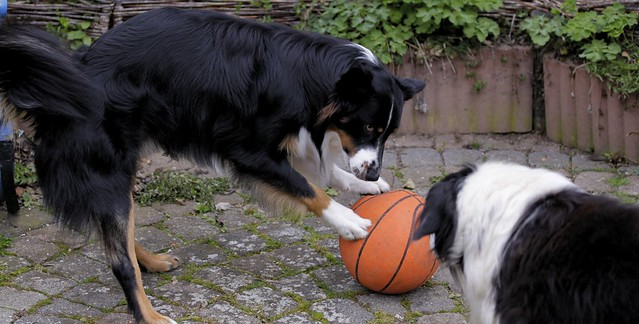 Come on play with me old boy.