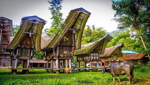 5 Kebudayaan Unik di Tana Toraja