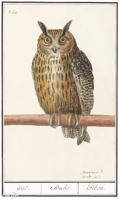 Long eared owl in vintage style