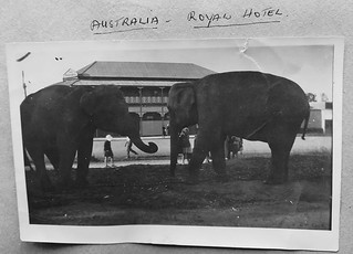 Circus elephants outside the Royal Hotel in Gayndah, Qld