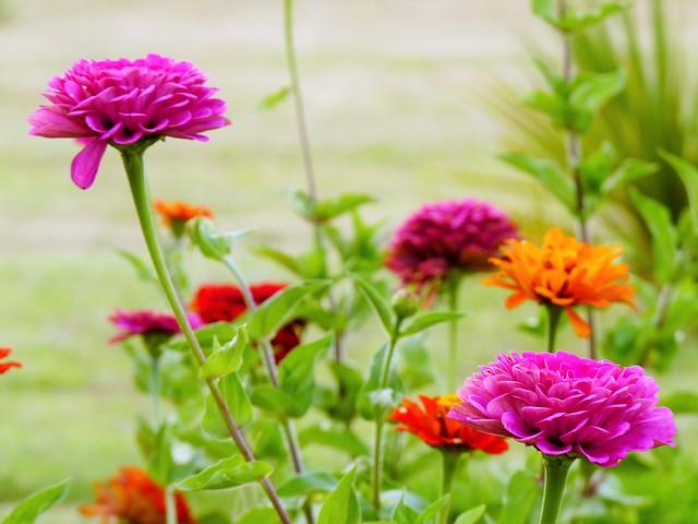 Marzo florido