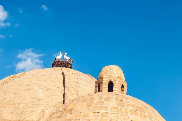 Storks on the dome of Toki Zargaron building, ancient trading domes in Bukhara, Uzbekistan