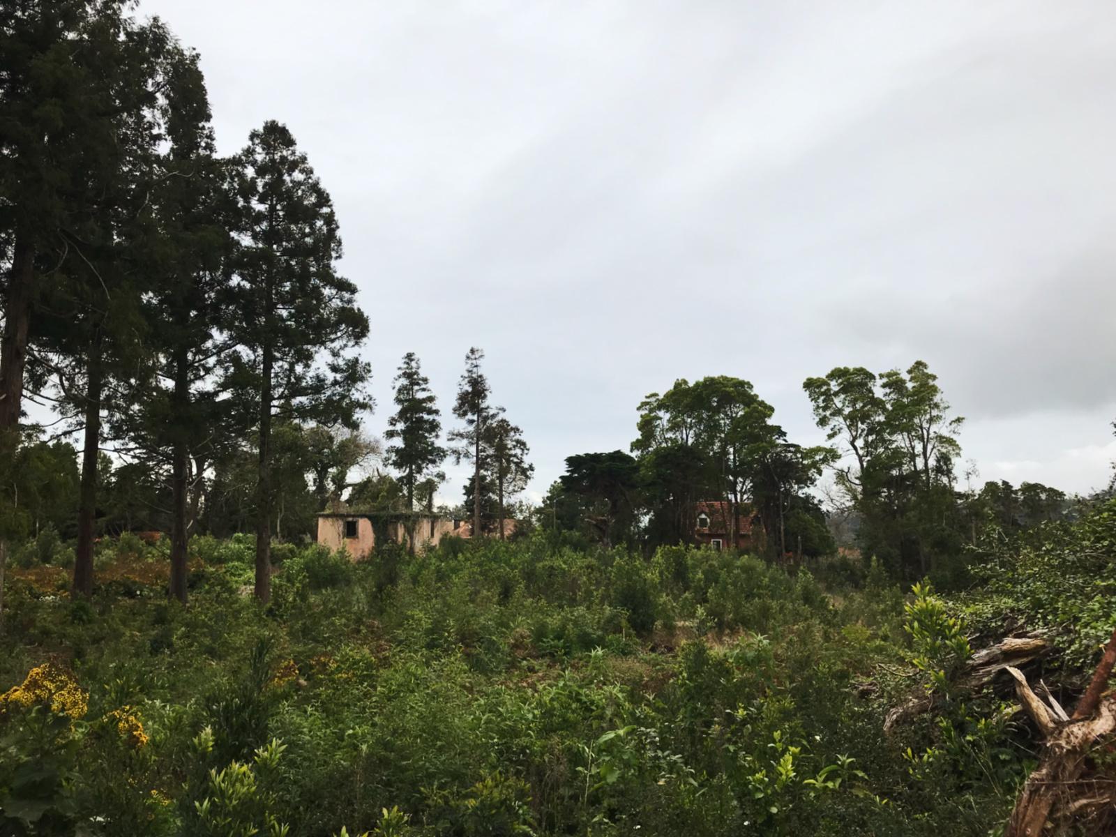 017-Madeira