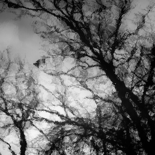 captaindanielwrightwoods d5000 desplainesriver dof nikon abstract blackwhite blackandwhite blur branches bw depthoffield forest monochrome natural noahbw reflection river silhouette sky spring square trees water woods