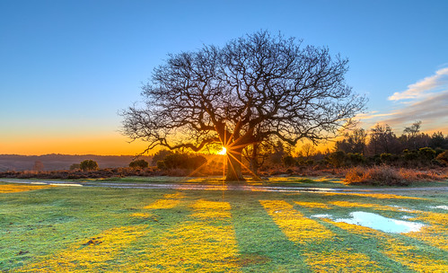 landscape newforest mogshade cloud tree sunrise