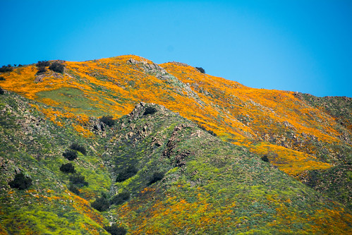 lakeelsinore poppies wildflowers green yellow sky plants
