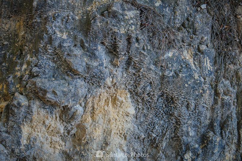 Textura de la foca del barranco antes de subir hacia Viladellops