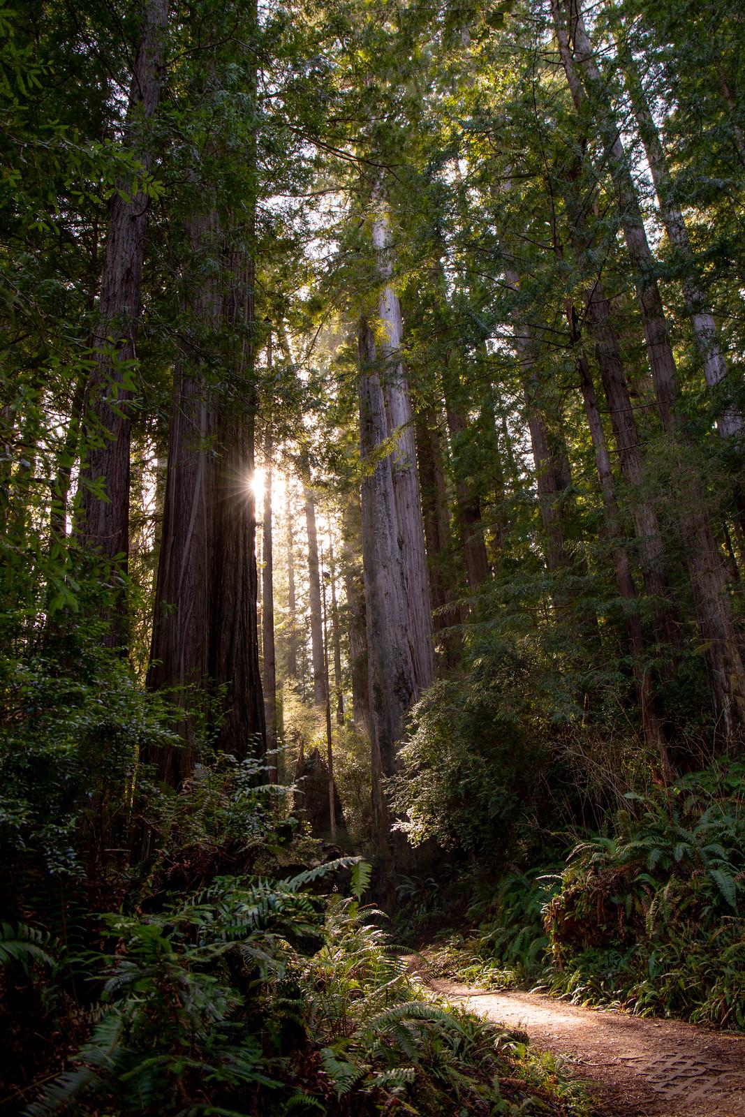 03.16. Prairie Creek Redwoods State Park