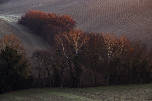 agriculture branches bucolic countryside earlymorning fields hills italy landscape lines marcheregion nature sunrise tree trees winter montecarotto provinceofancona it