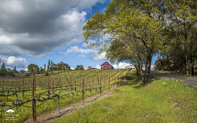 A New Spring in Sonoma County