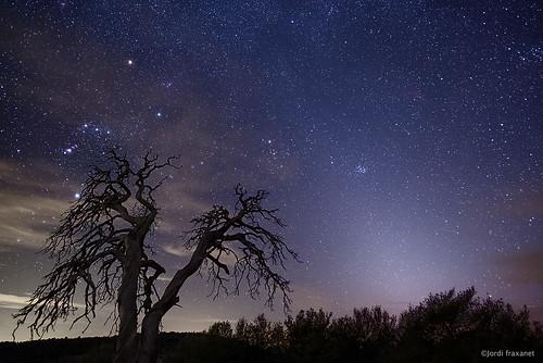 Orió i llum zodiacal