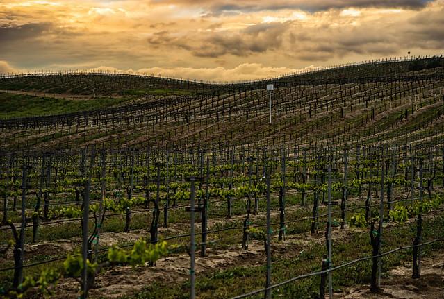 DSC01512-E - Maurice Car'rie Vineyards