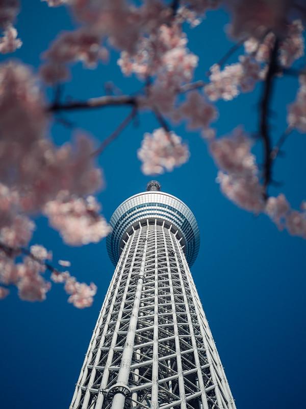 Skytree 晴空塔|東京 Tokyo