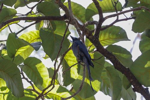 arippa kerala trivandrum