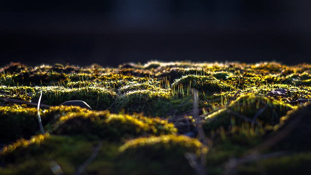 A mossy spring sunset...