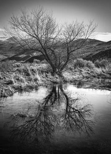 one tree | by Aaron_Smith_Wolfe_Photography