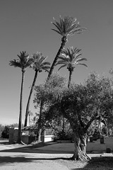 Marrakech 2018 / XII