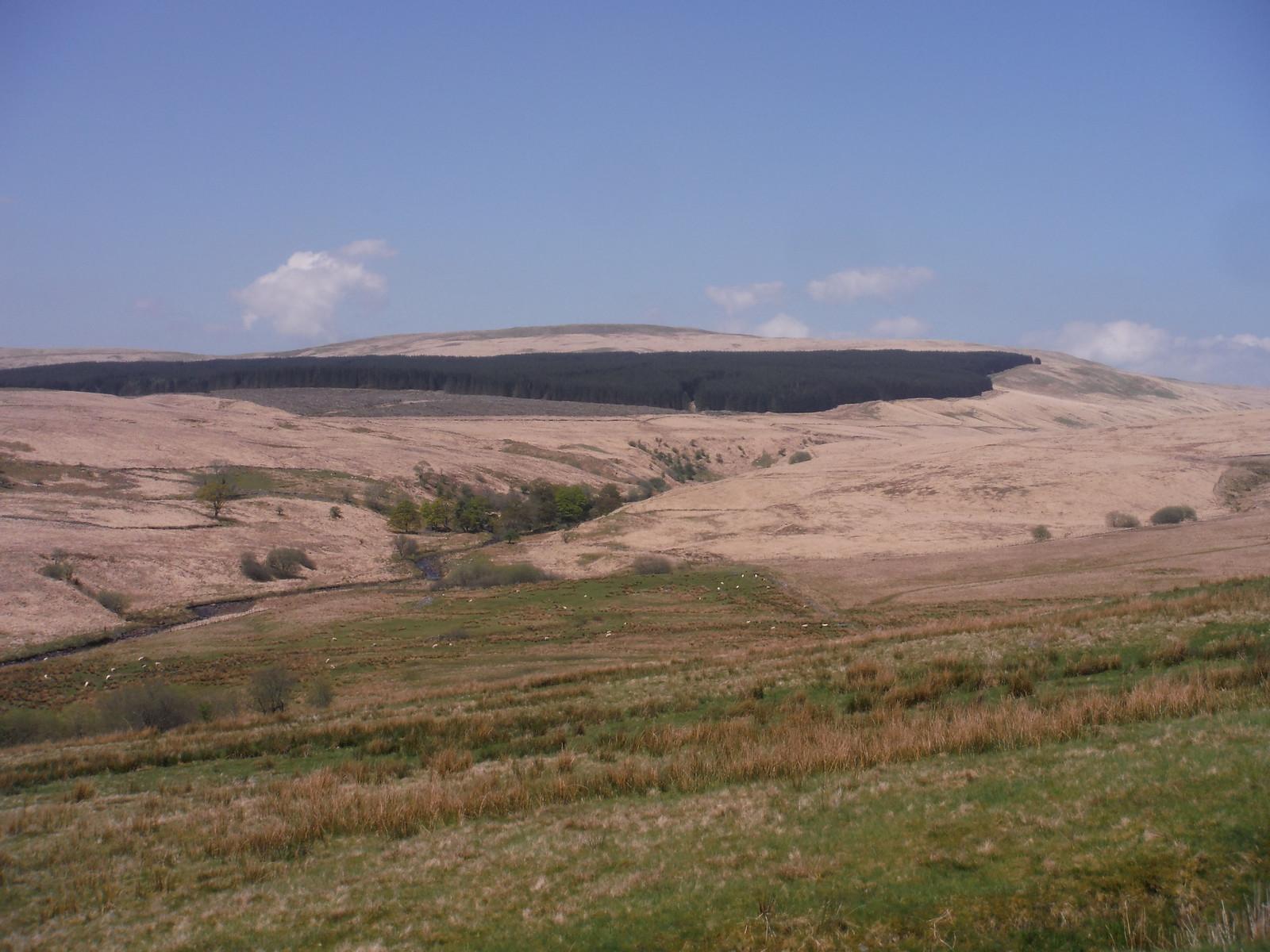 Wood on Fan Fraith, from Sarn Helen Roman Road SWC Walk 307 - Fforest Fawr Traverse (Craig y Nos to Llwyn-y-celyn) [Beacons Way Route]