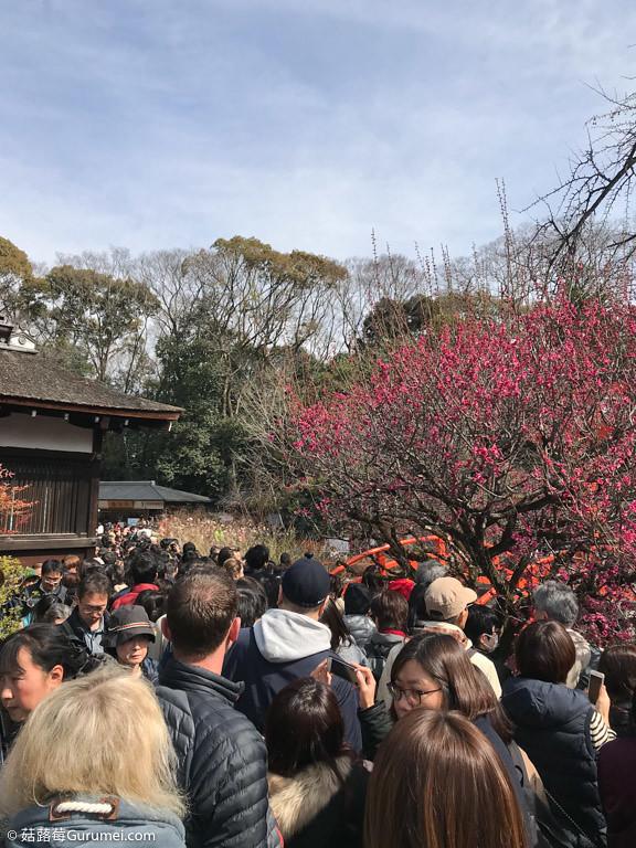 打工度假-京都生活-女兒節-071