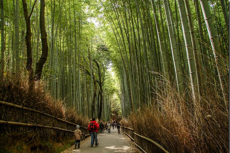 嵐山竹林小徑 1