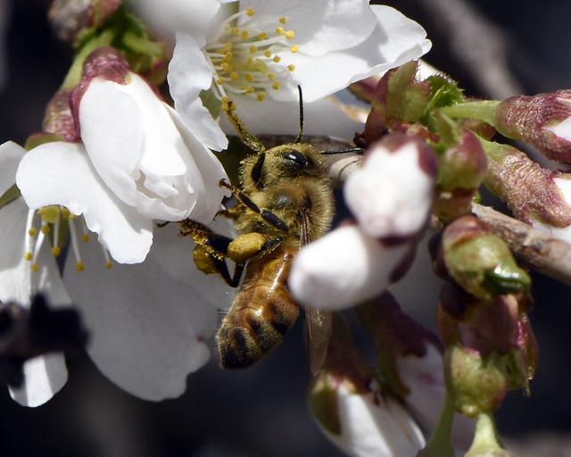 _DSC2334.jpg=Don't Worry, Bee Happy!