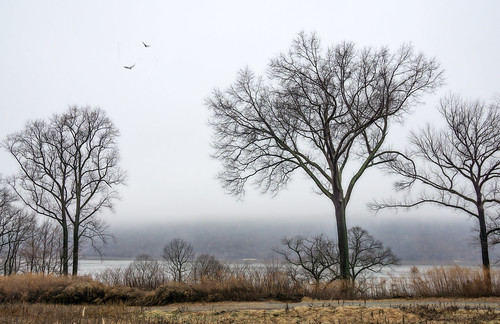 nature scenic fog trees winter hudsonriver view branches mist landscape