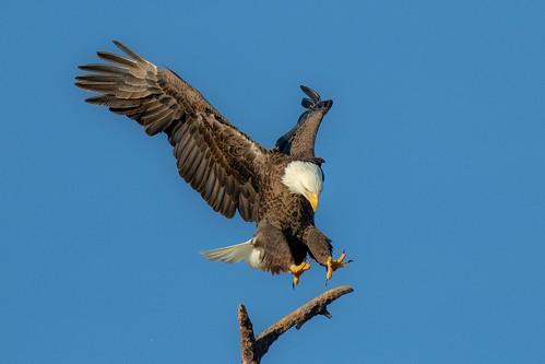 outdoor water nature wildlife 7dm2 ef100400mm ocean canon florida bird