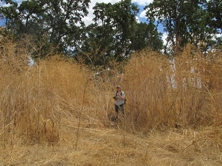 Graduate student recording Willamette Valley mound site (photo by Pat Reed) | by Shelbylra