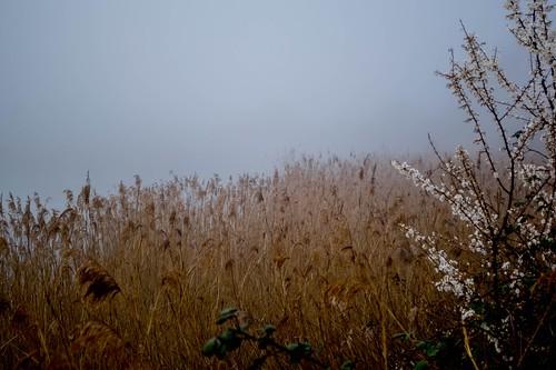 24_03_2019 Natur Nebel   by Katzenpfote