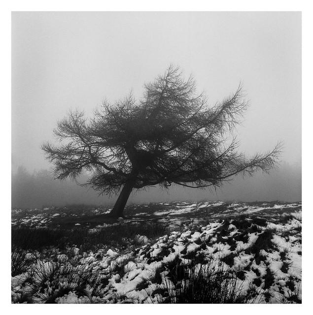 FILM - A tree on White Edge