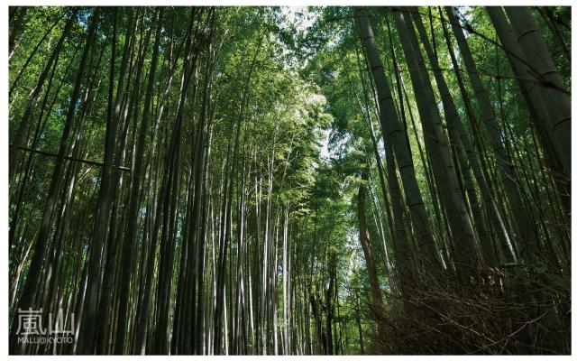 嵐山半日遊-26