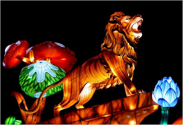 Zoo de Thoiry - Lumières sauvages - Lion