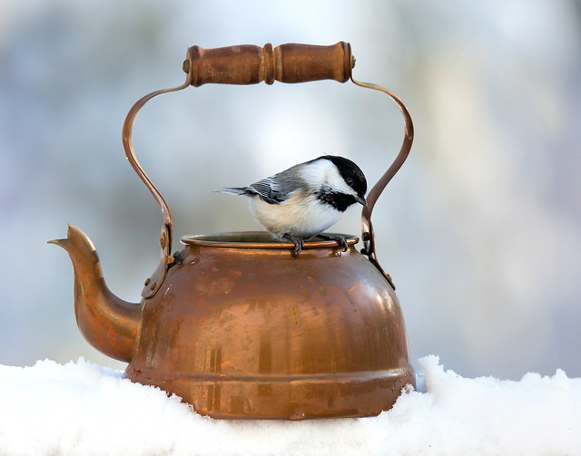 On the Kettle