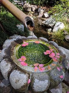 Descanso Gardens | by RuggyBearLA