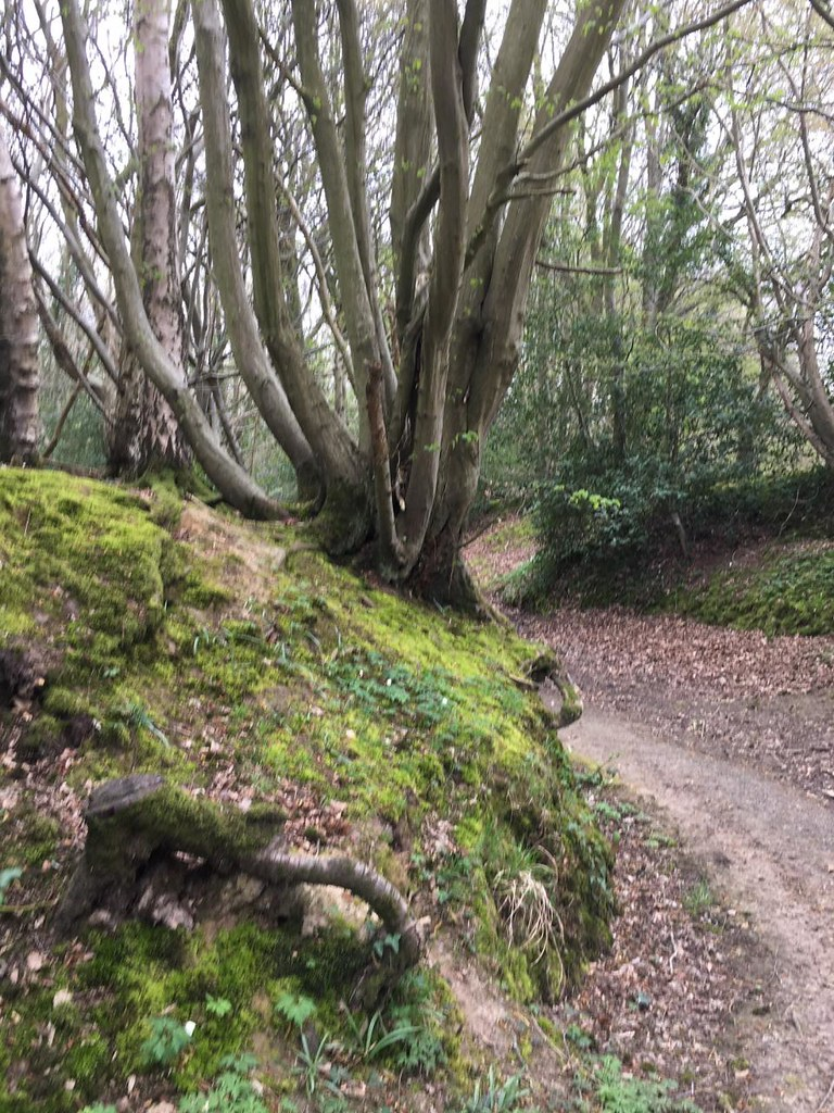 Mossy bank Robertsbridge to Battle