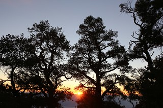 0733 Sunrise through the pines at the Mahogany Flat Campground | by _JFR_