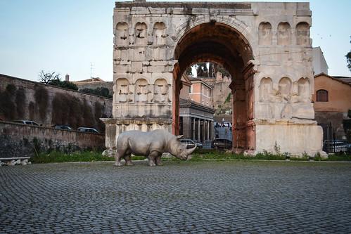Rinoceronte romano | by Luca Di Ciaccio