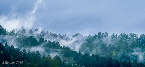 fog cloud atmosphere weather upslopefog watervapor ground forest mountain droplets nature risingterrain marvel outdoor tree sky mist