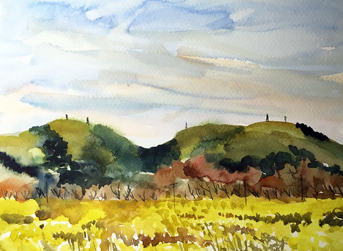 190316 Mustard in Morgan Hill | by sumacm