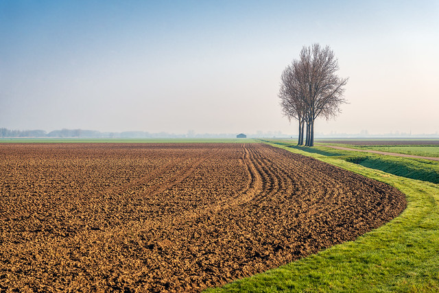 Row of bare trees at the edge of a plowed field