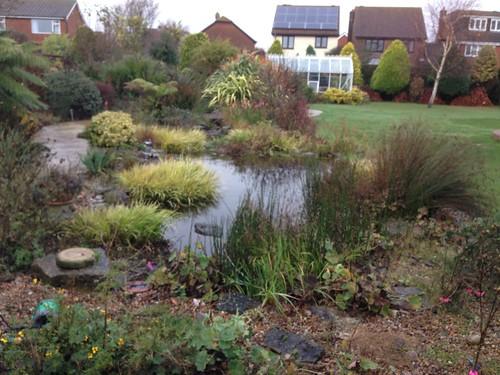 Pond clean Lee on solent