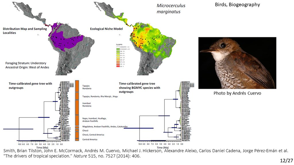 Smith et al. 2014 - Microcerculus marginatus