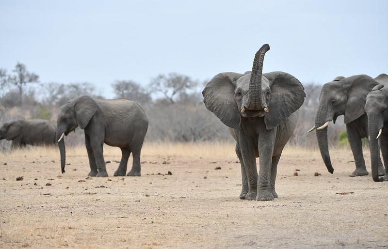 2255 Elephant