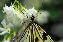 Papillons en Liberté 2019 - Photo 22