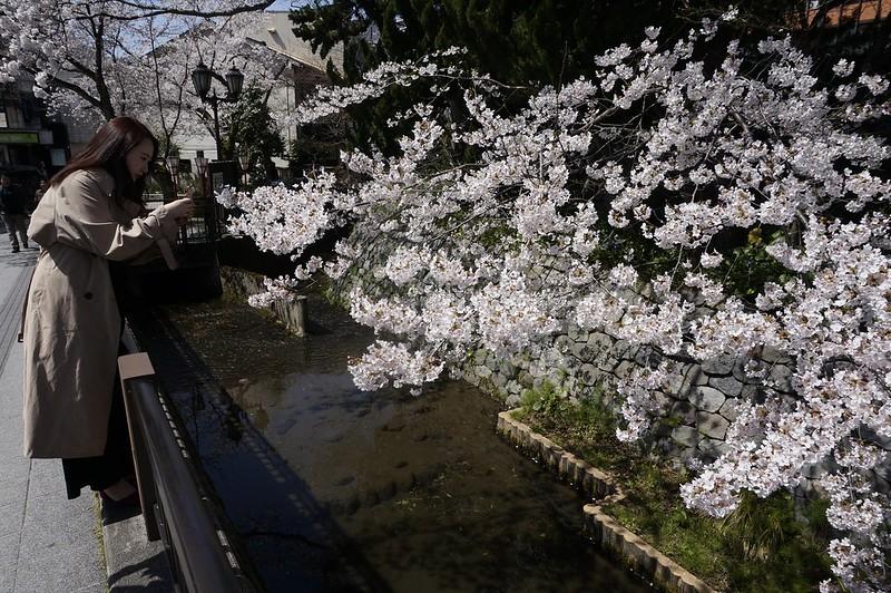 Blooming in KANAZAWA