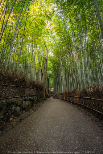 ancient arashiyama asia attraction autumn background bamboo beautiful destination forest green japan kyoto landmark landscape light natural nature outdoor pathway sun sunlight sunrise temple tourist travel traveler twilight view walkway way